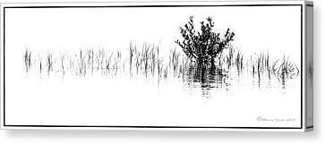 Mangrove Forest Canvas Print - All You Need by Marvin Spates