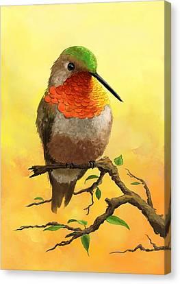 Allen's Hummingbird Canvas Print