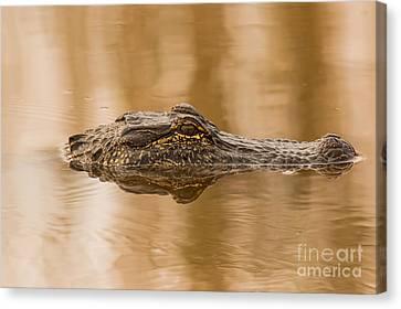 Cabin Window Canvas Print - Alligator Head by Robert Frederick