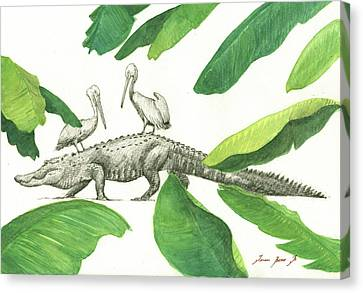 Alligator With Pelicans Canvas Print by Juan Bosco