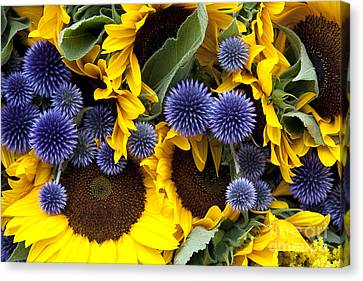 Alliums Canvas Print - Allium And Sunflowers by Jane Rix