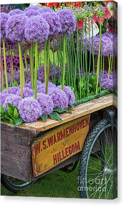 Tricycle Canvas Print - Allium Cart by Tim Gainey