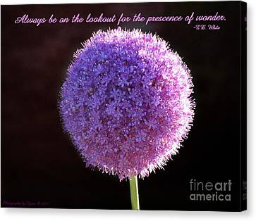 Allium Canvas Print by Gena Weiser