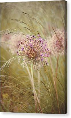 Alliums Canvas Print - Allium Purple Sensation by Jacky Parker Photography