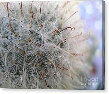 Canvas Print featuring the photograph Allium Sativum by Jolanta Anna Karolska
