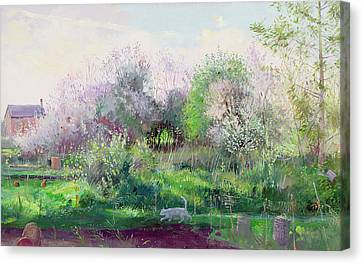 Allotment Stalker Canvas Print by Timothy Easton