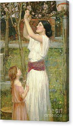 Almond Blossoms Canvas Print by John William Waterhouse
