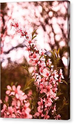Almonds1 Canvas Print