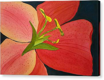 Almost A Tiger Lily Canvas Print