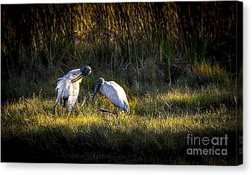 Spoonbill Canvas Print - Almost Bed Time by Marvin Spates