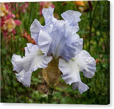 Canvas Print featuring the photograph Almost Blue Bearded Iris by Jean Noren
