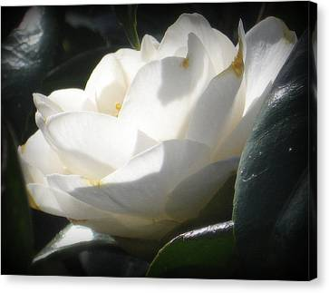 Camellia Canvas Print - Almost Perfect by Mg Blackstock