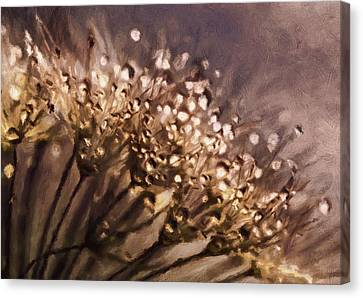 Drop Canvas Print - Almost Sepia Delicate Dandelions by Georgiana Romanovna