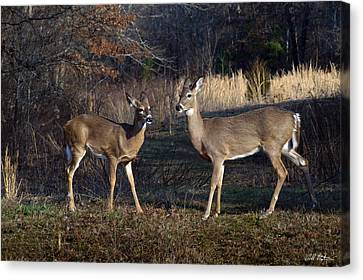Almost Spring Canvas Print by Bill Stephens