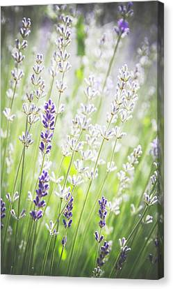 Canvas Print featuring the photograph Almost Wild..... by Russell Styles