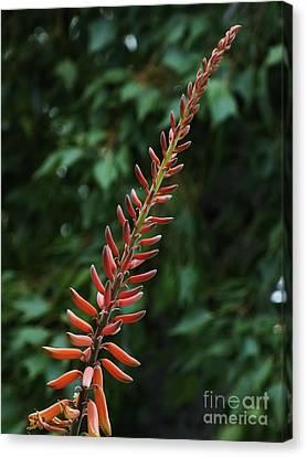 Aloe Flower Canvas Print