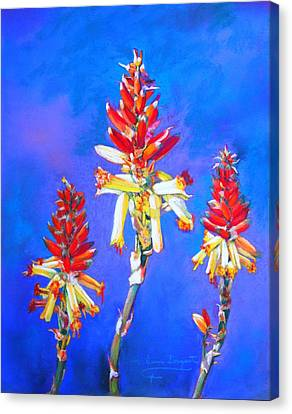 Aloe Flower Spike Canvas Print by M Diane Bonaparte