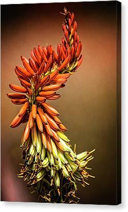 Canvas Print featuring the photograph Aloe Vera Twist  by Saija Lehtonen