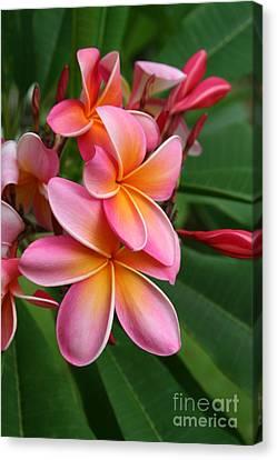 Aloha Lei Pua Melia Keanae Canvas Print by Sharon Mau