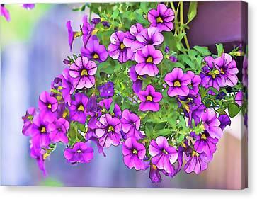 Aloha Purple Sky Calibrachoa Abstract I Canvas Print