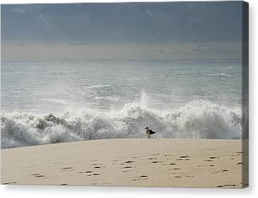 Alone - Jersey Shore Canvas Print by Angie Tirado