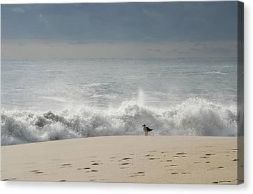 Alone - Jersey Shore Canvas Print