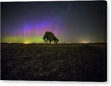 Cornfield Canvas Print - Alone by Aaron J Groen