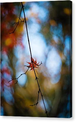 Alone But Still Dazzling Canvas Print by Mike Reid