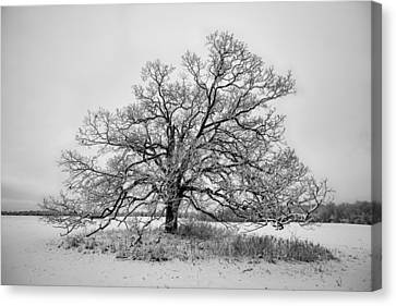Alone Canvas Print by David Letts