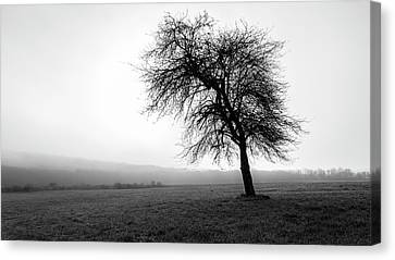 Canvas Print featuring the photograph Alone In A Field by Andrew Pacheco