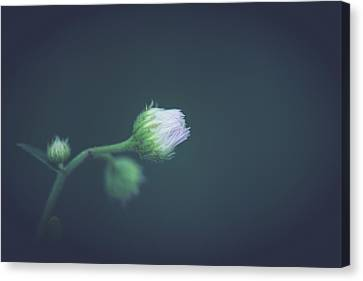 Canvas Print featuring the photograph Alone In Dreams by Shane Holsclaw