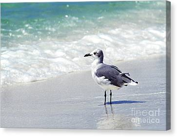 Alone On The Beach Canvas Print by Thomas R Fletcher