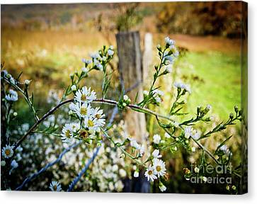 Canvas Print featuring the photograph Along A Fence Row by Douglas Stucky