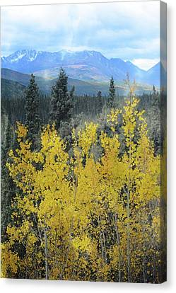 Along The Alaskan Highway  Canvas Print