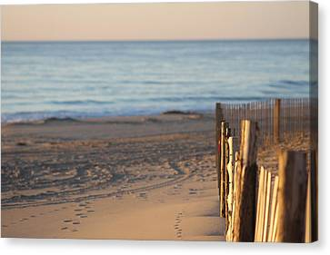 Along The Fence Canvas Print