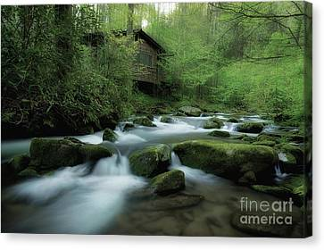 Along The Morning Stream Canvas Print by Michael Eingle