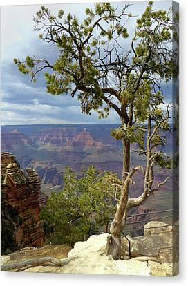 Canvas Print featuring the photograph Along The Rim by Gordon Beck