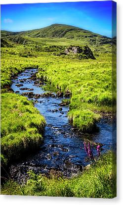 Along The Ring Of Kerry Canvas Print by Debra and Dave Vanderlaan