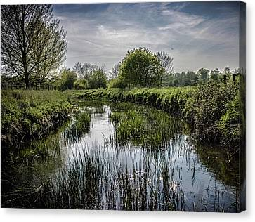 Along The River Bank Canvas Print by Martin Newman