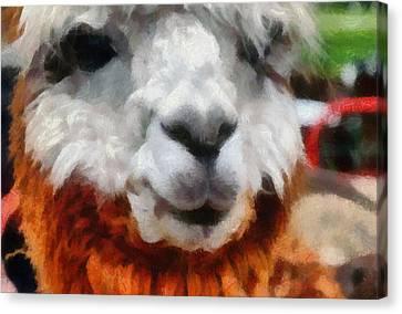 Alpaca Canvas Print by Michelle Calkins