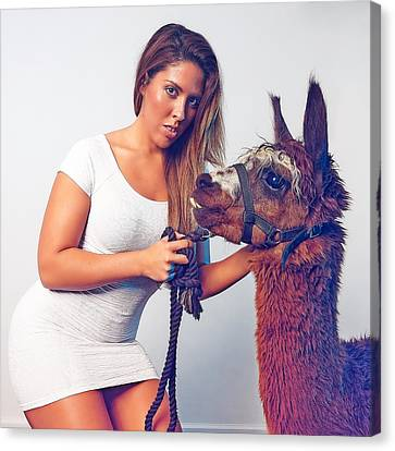 Alpaca Mr. Tex And Breanna Canvas Print by TC Morgan