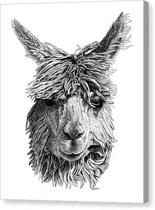 Alpaca Canvas Print