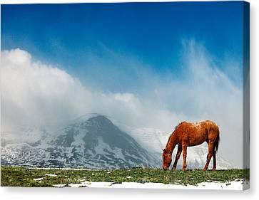 Alpine Equine Canvas Print by Todd Klassy