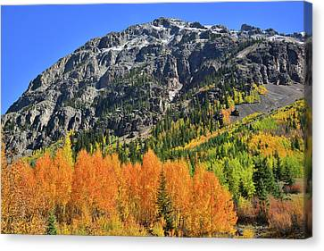 Canvas Print featuring the photograph Alpine Loop Road Aspens by Ray Mathis