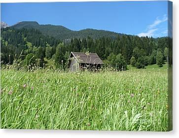 Alpine Meadow  Canvas Print by Carol Groenen