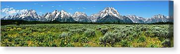 Alpine Meadow Teton Panorama II Canvas Print by Greg Norrell