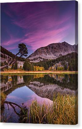 Alpine Reflection Canvas Print by Dan Holmes