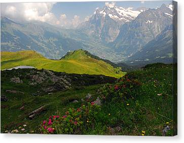Alpine Roses In Foreground Canvas Print by Anne Keiser