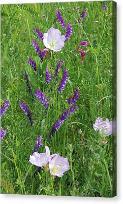 Canvas Print featuring the photograph Alpine Vetch And Primroses by Robyn Stacey