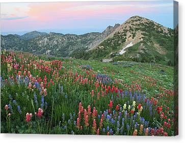 Alpine Wildflowers And View At Sunset Canvas Print by Brett Pelletier